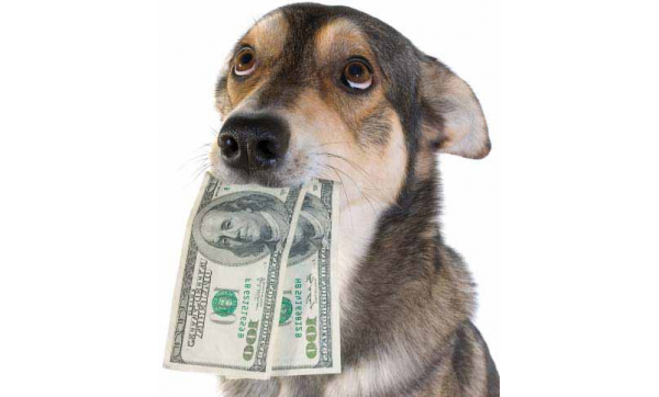 Why Invest in the Pet Industry?