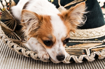 HISPANIC PET SPENDING DOWN -$1.0B : MID-YEAR UPDATE