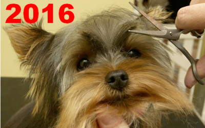 2016 U.S. PET SERVICES SPENDING $6.84B…UP ↑$0.58B