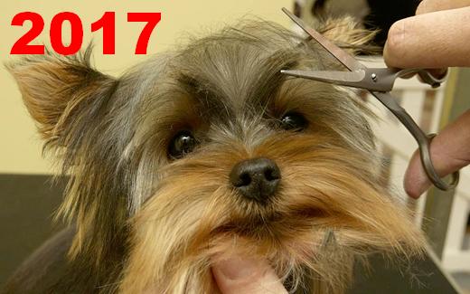 2017 U.S. PET SERVICES SPENDING $6.77B…Down ↓$0.07B